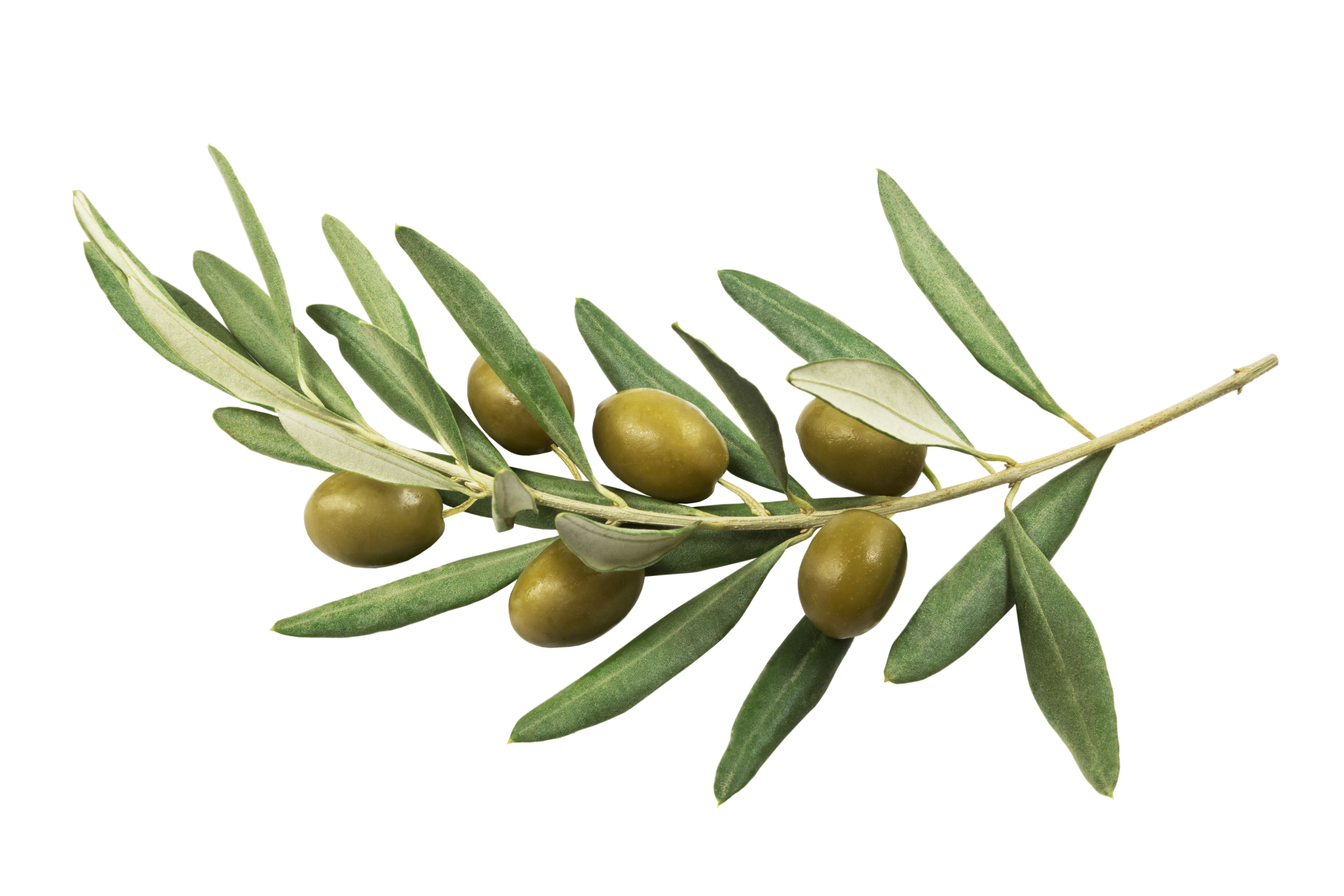 Olives Natures Gift to us